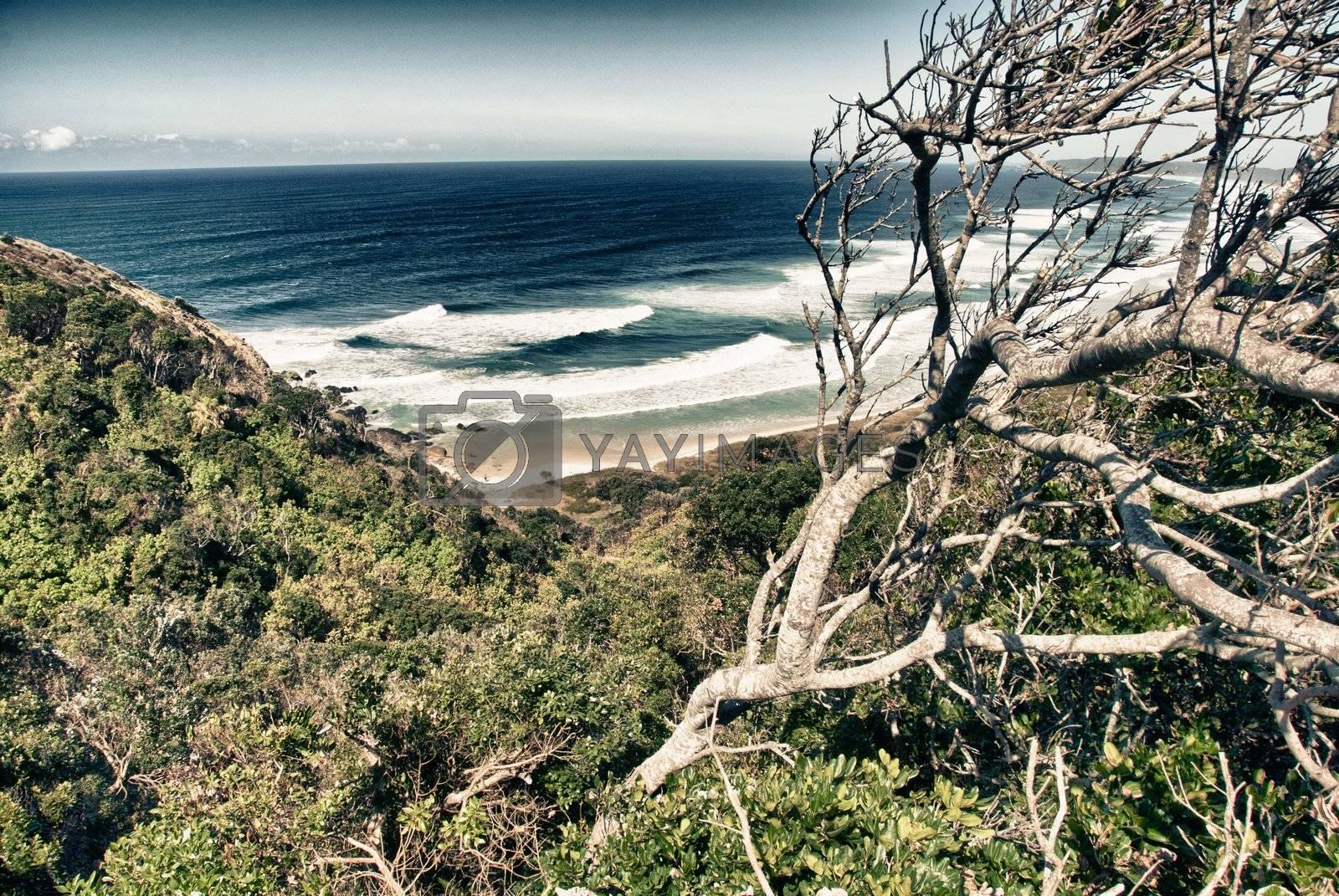 Royalty free image of Coast of Byron Bay by jovannig