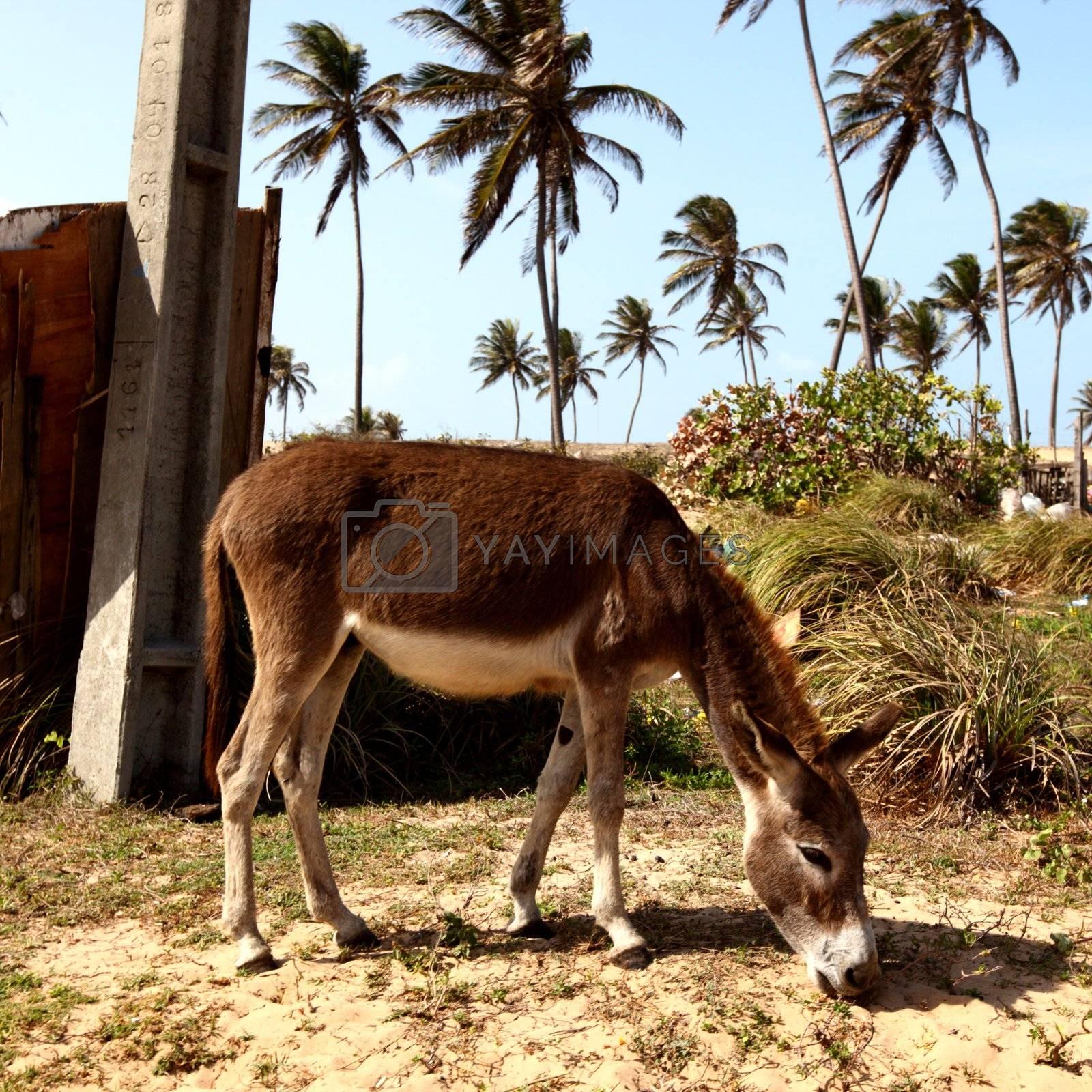 donkey eat grass in desert