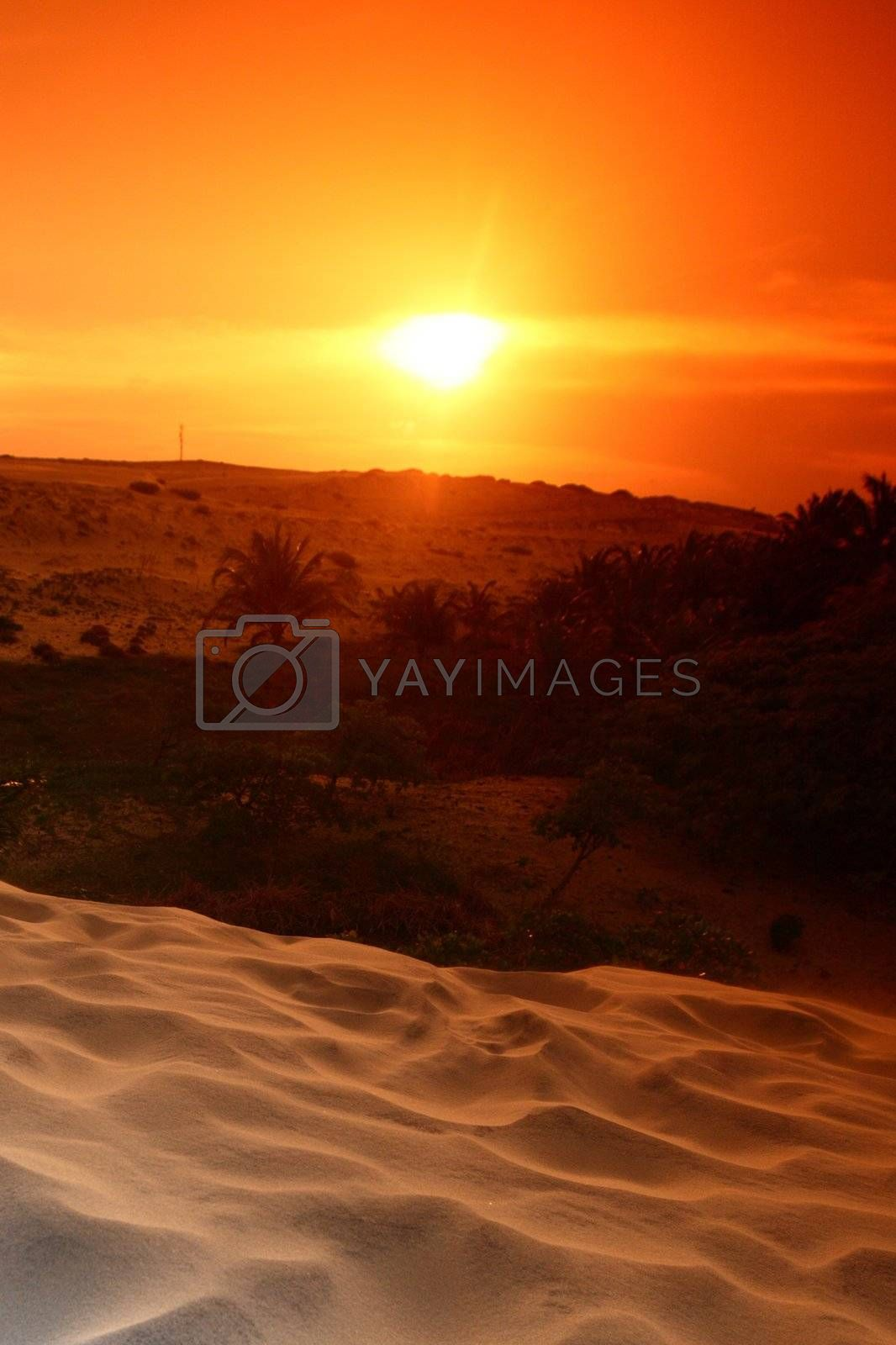 desert by Yellowj