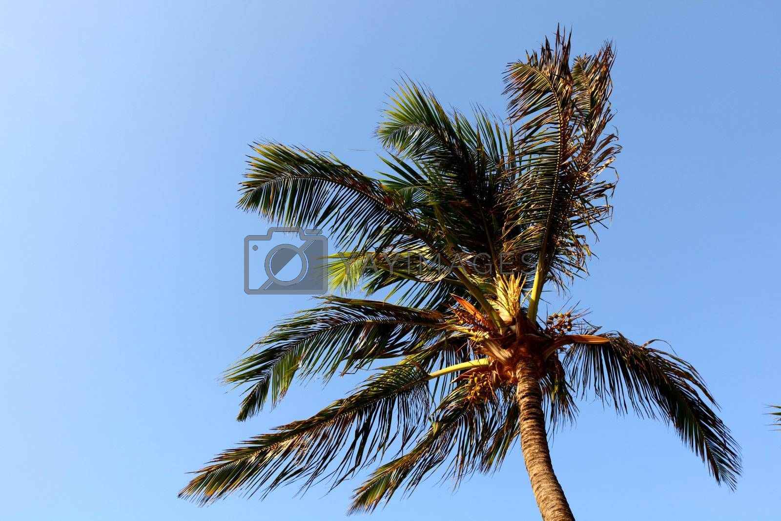 palm in blue sky by Yellowj