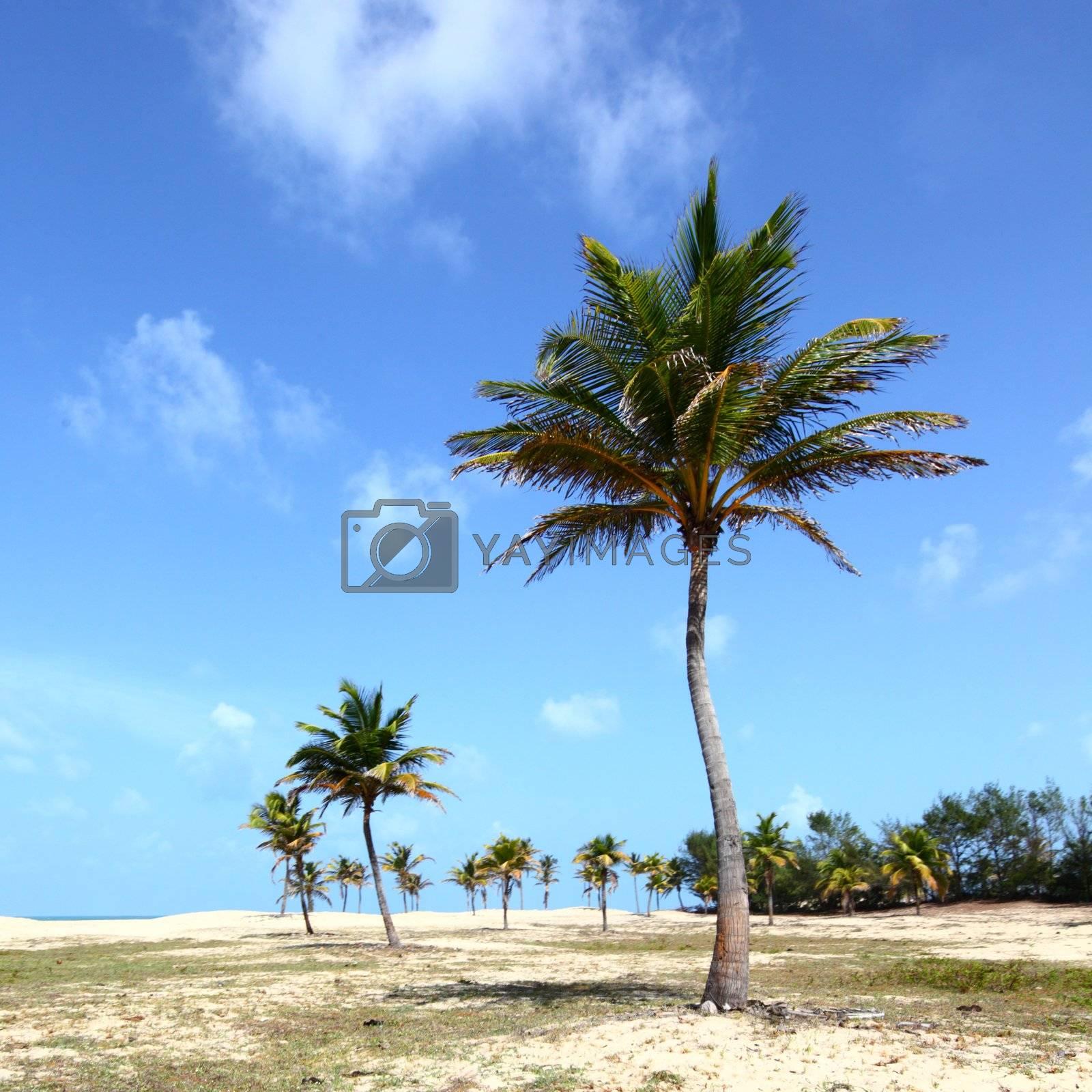 desert palm under blue sunny sky