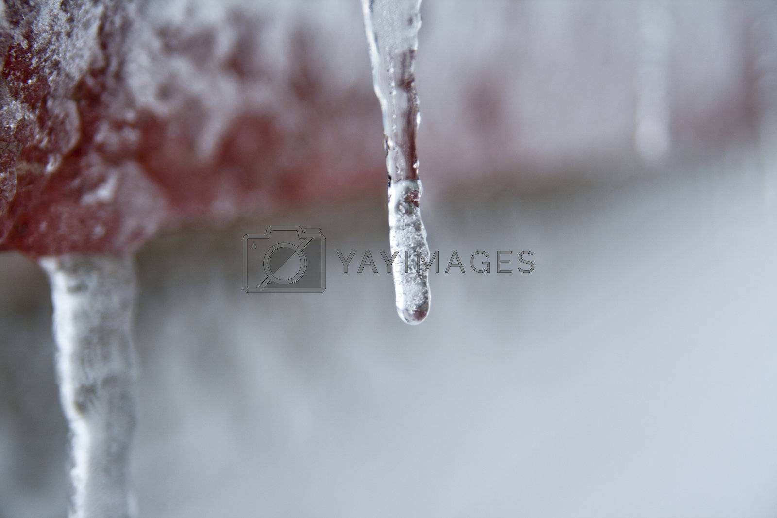 Icicle in cold Randaberg