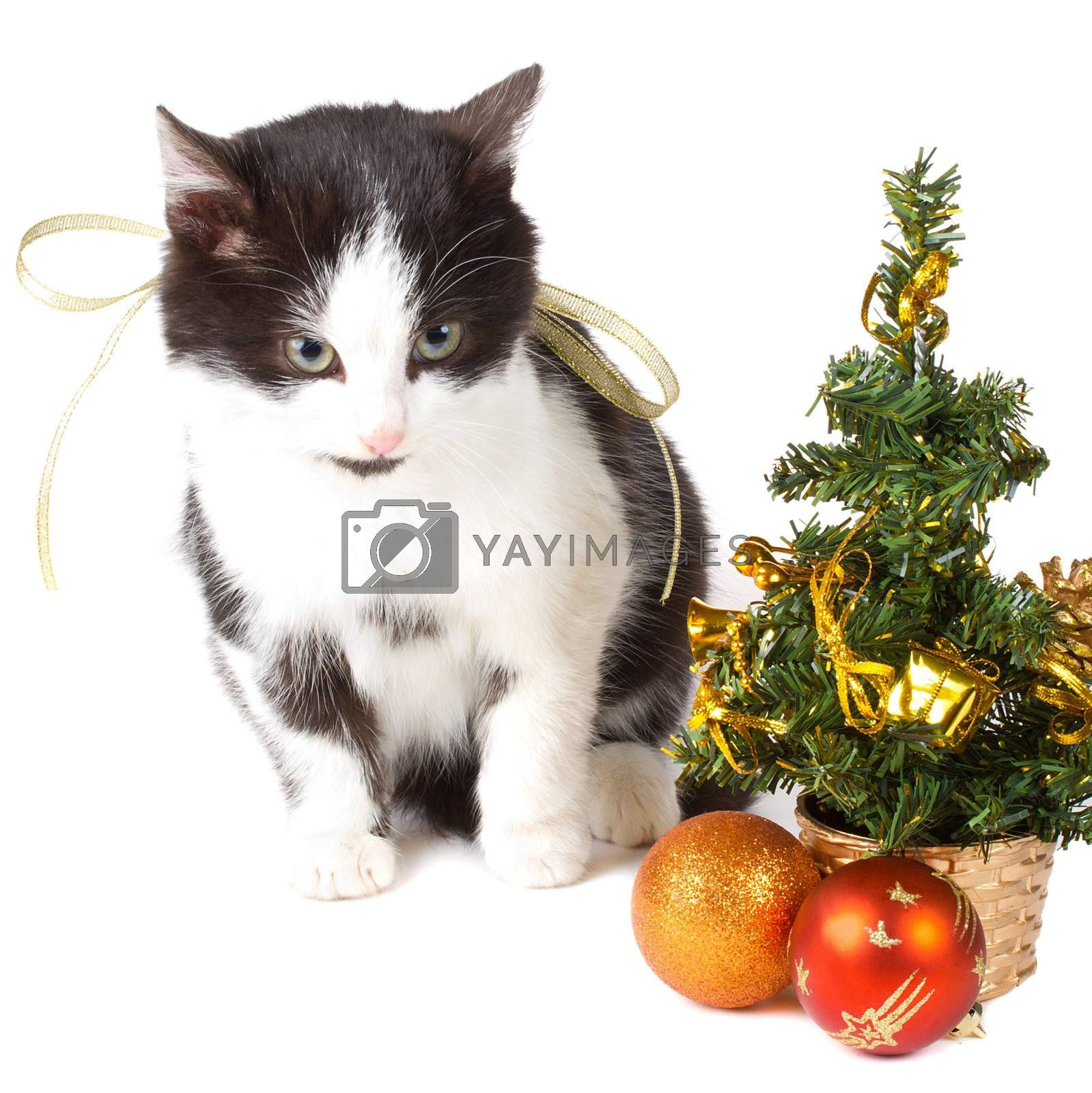 close-up cat and christmas decorations, isolated on white