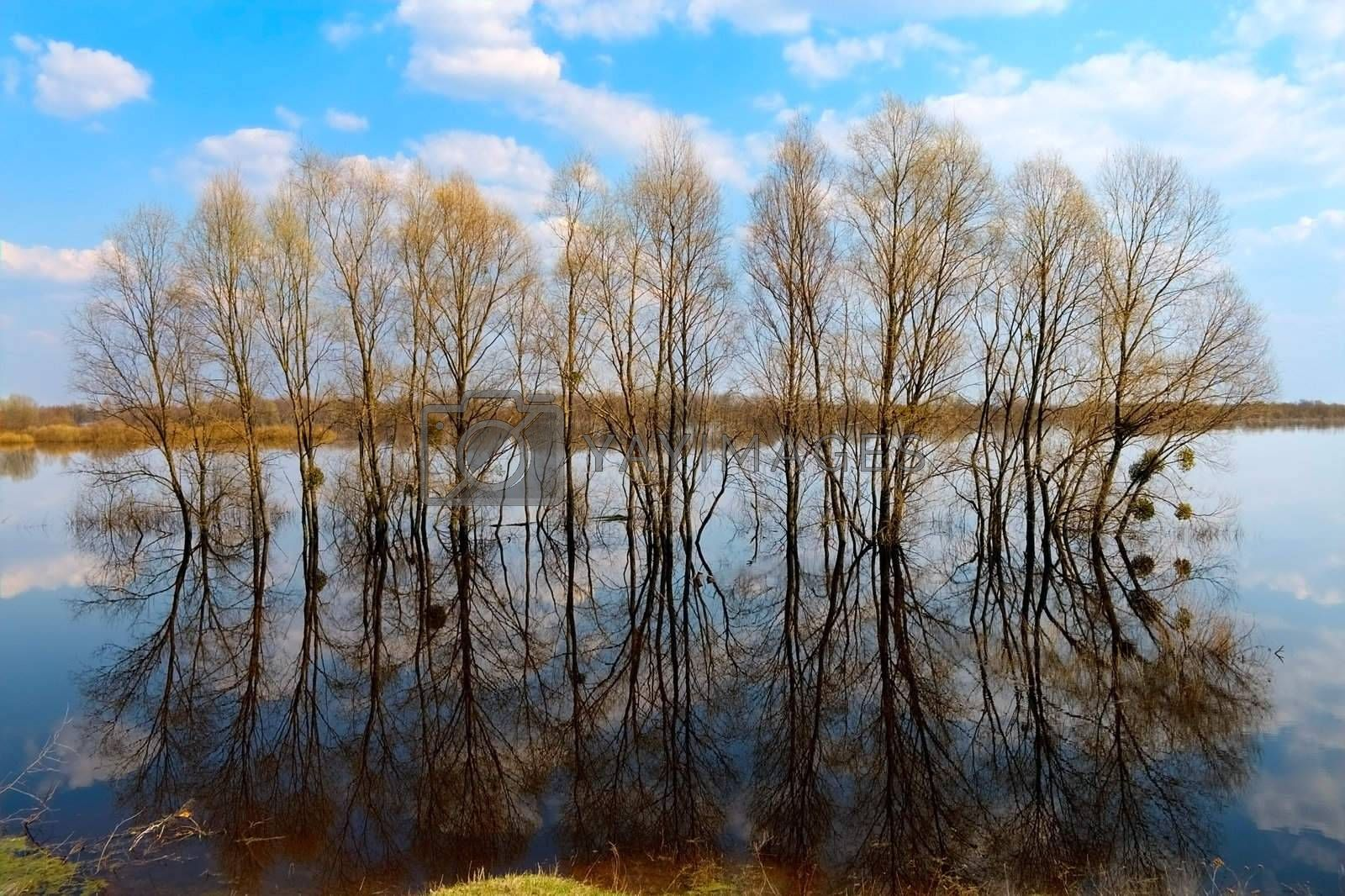 many trees in water-meadow