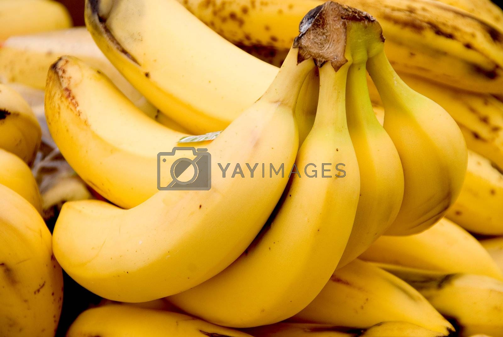 A fresh and delicious banana ready to be eaten.