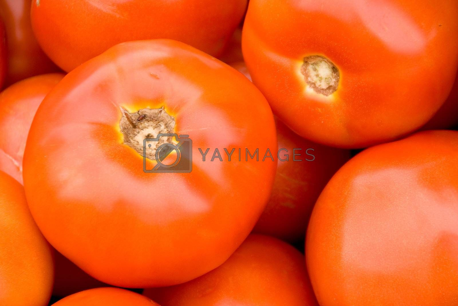 A beautiful and lucious tomato amongst a pile of its kind.