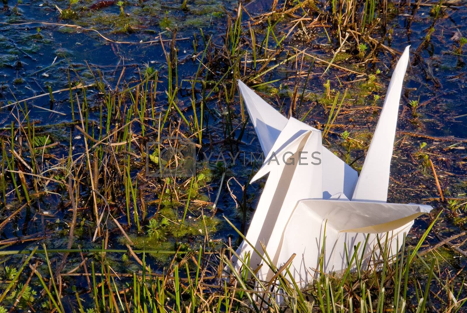 A paper oragami crane in a body of water.