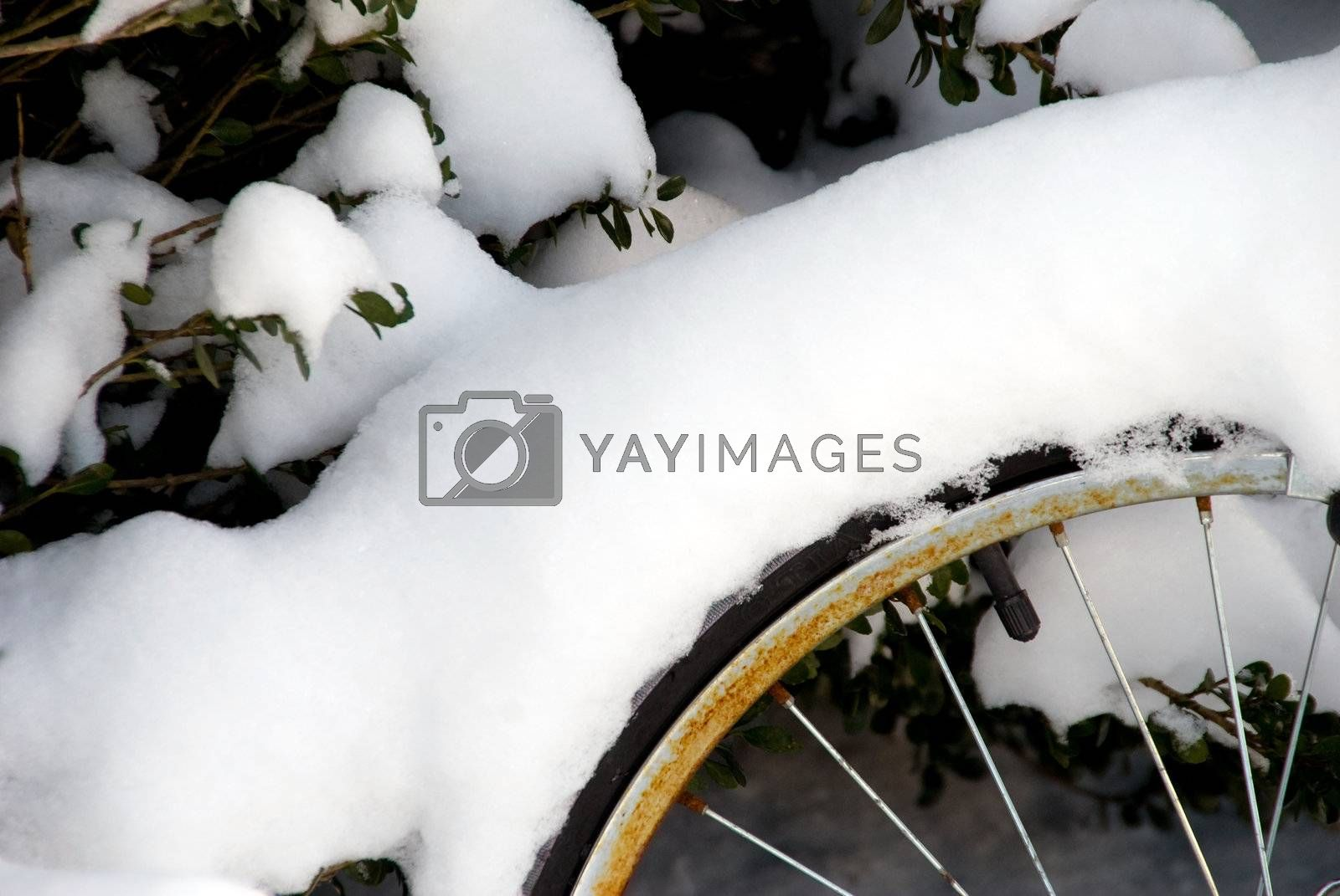 A bicycle wheel covered in fresh snow.