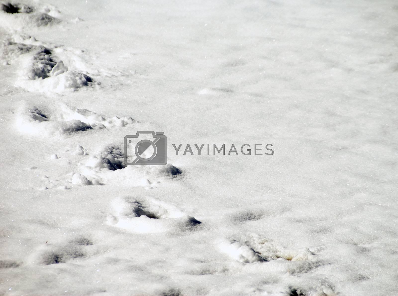A set of deep footprints in freshly fallen snow.