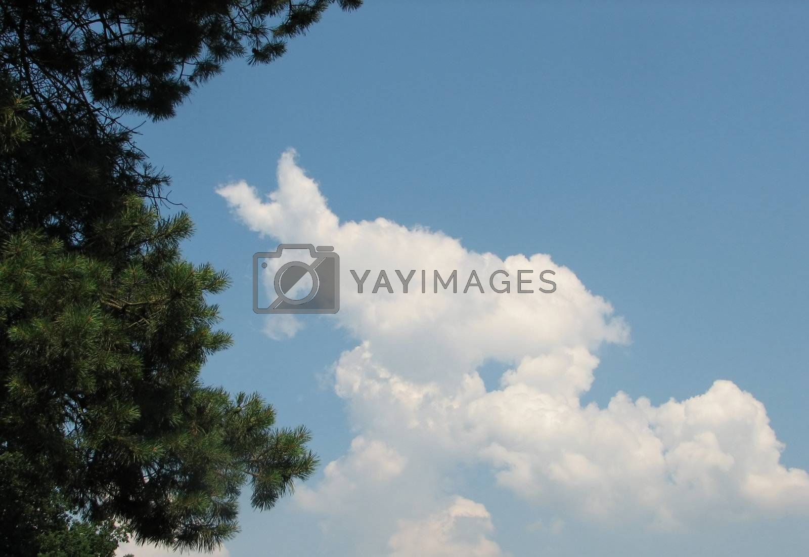 Sky with clouds, usable as background, a pine tree can be seen in the foreground