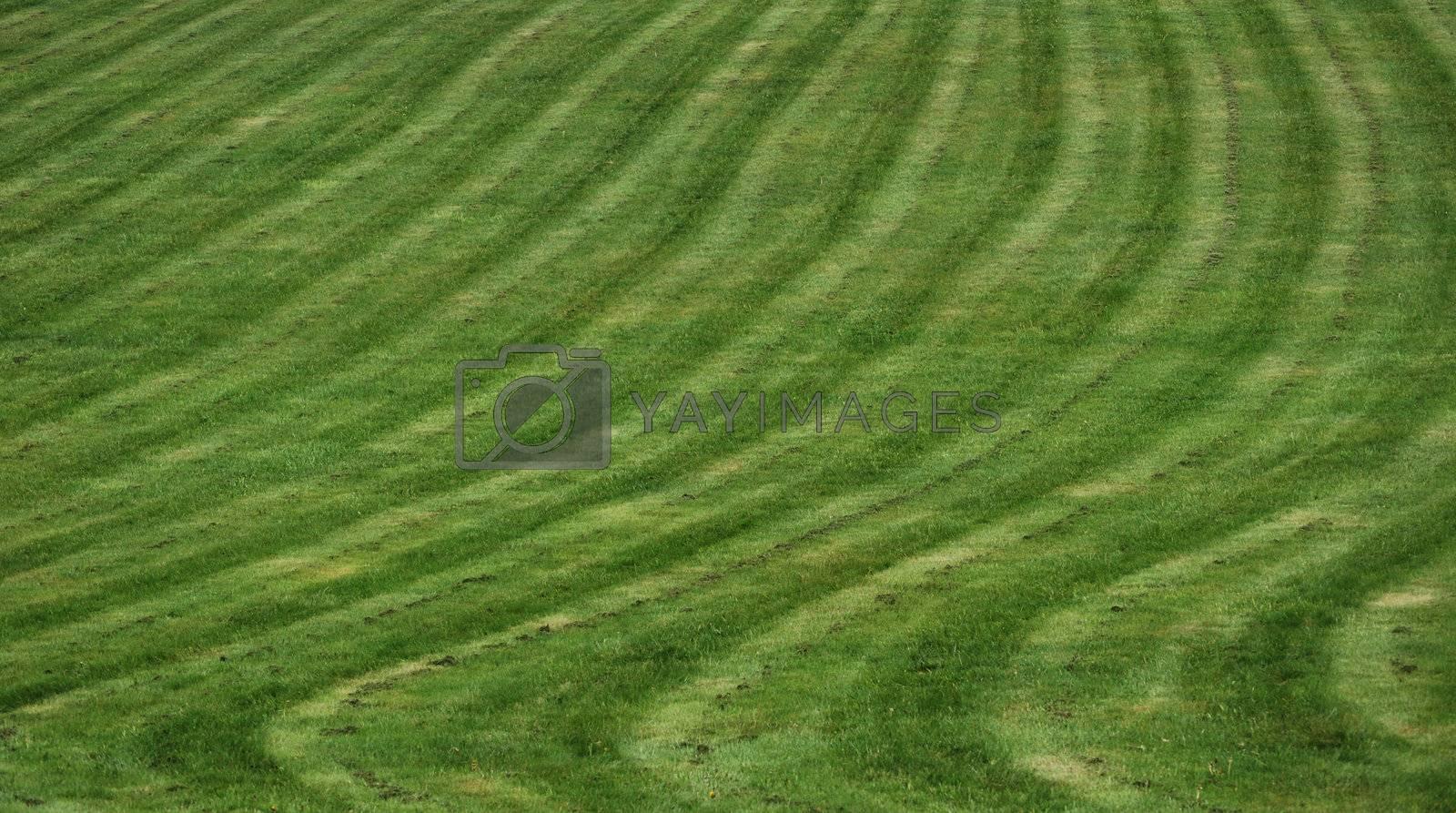 Green grass by windmill