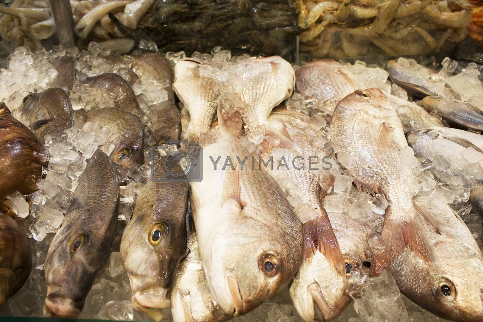 Royalty free image of Fresh Seafood for Sale by shariffc