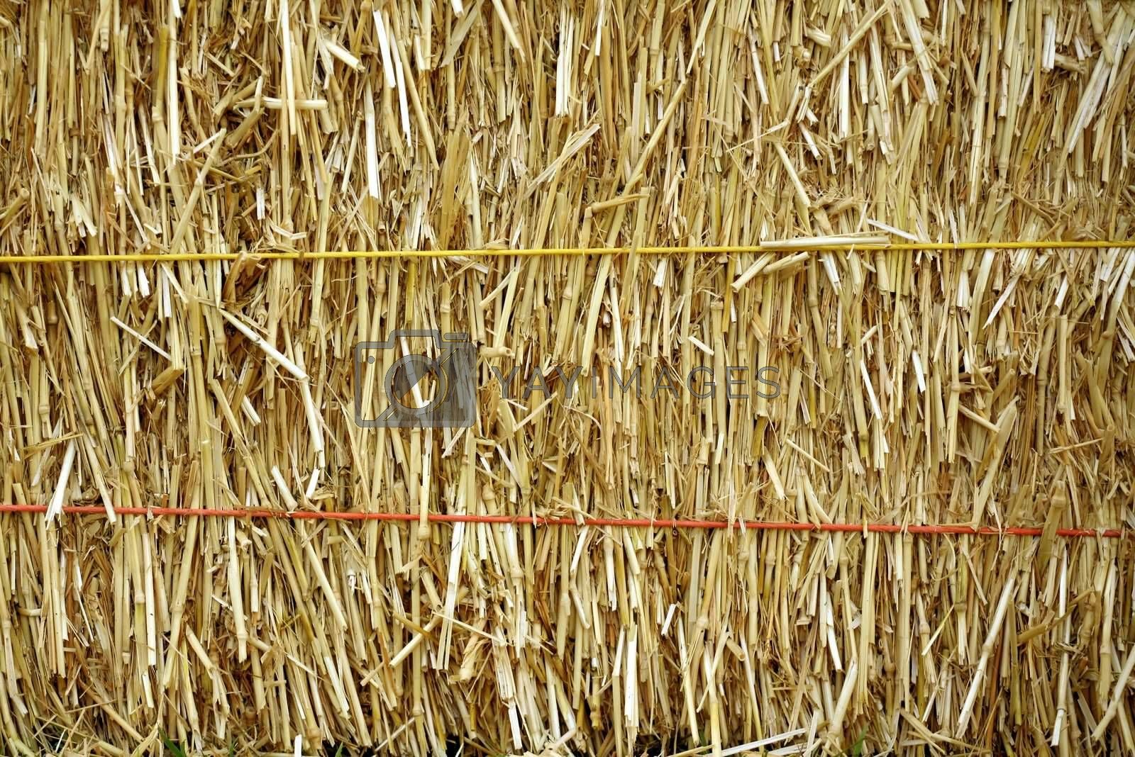 Royalty free image of Golden straw bale by scrappinstacy