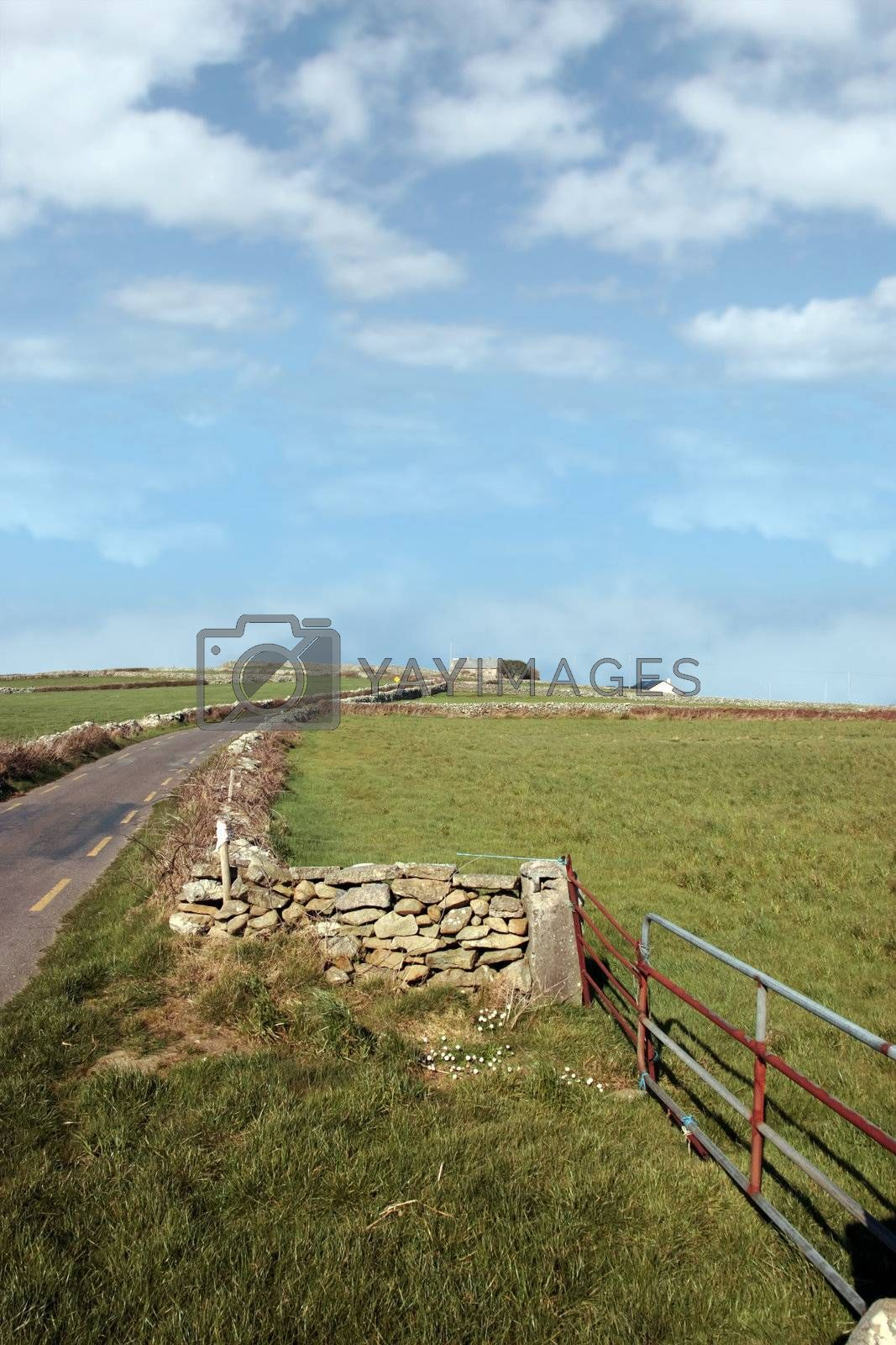 Royalty free image of quiet country road by morrbyte