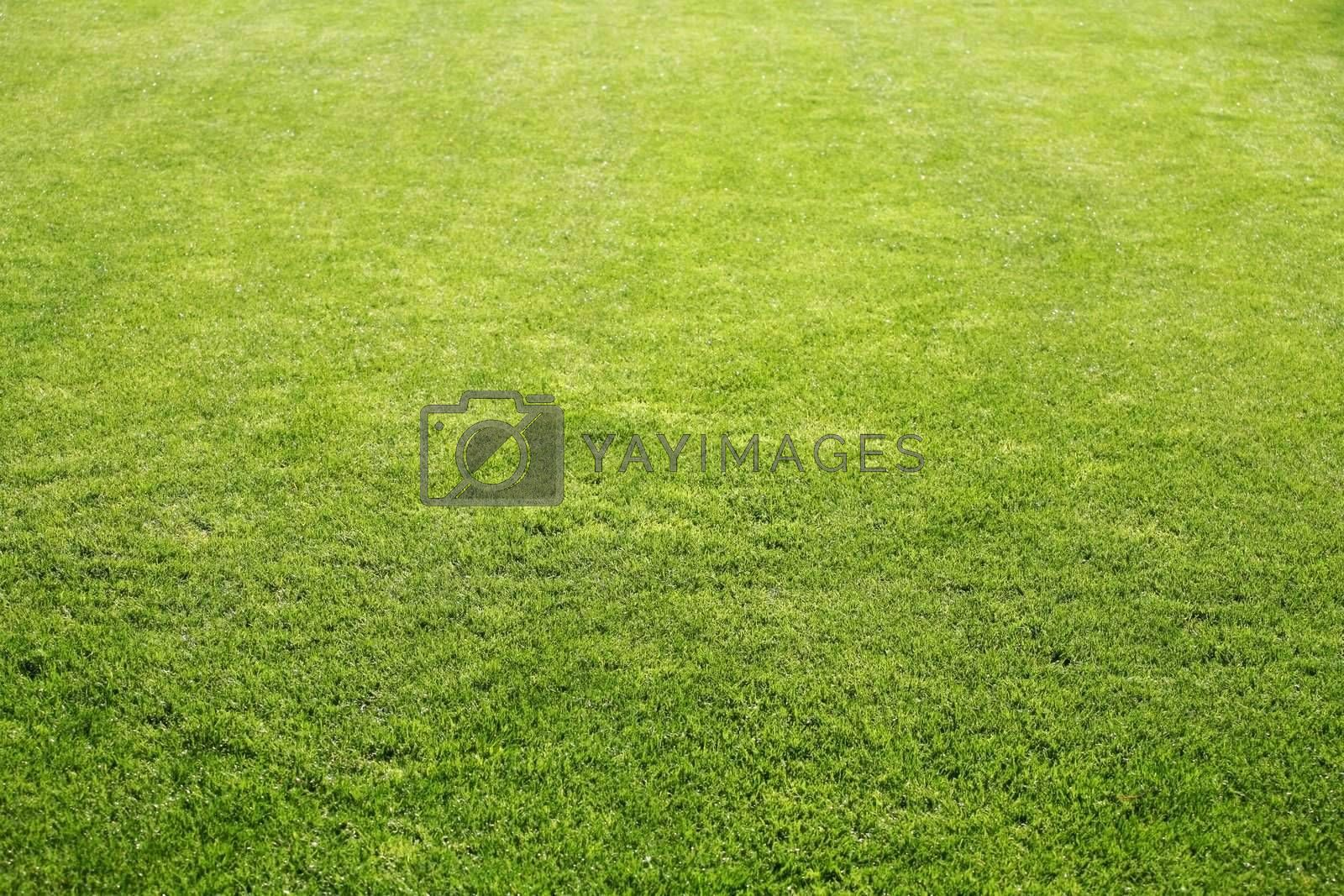 Royalty free image of Grass by scrappinstacy