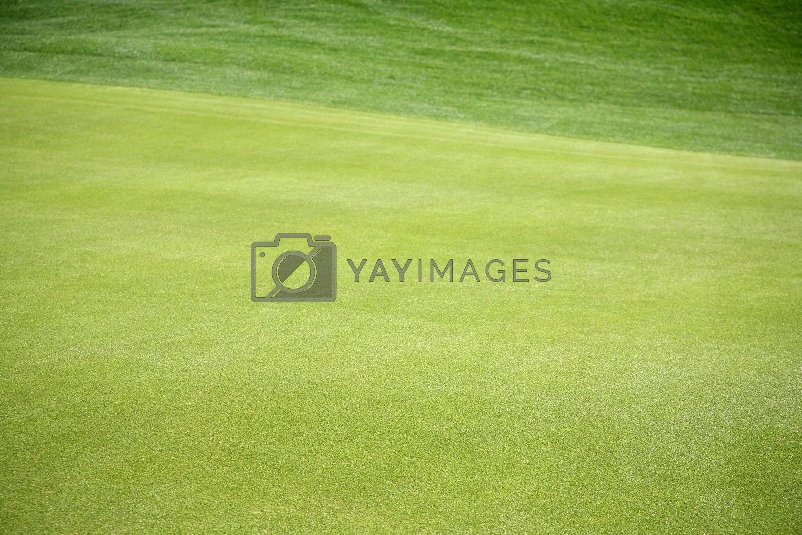 Royalty free image of Grass 4 by scrappinstacy