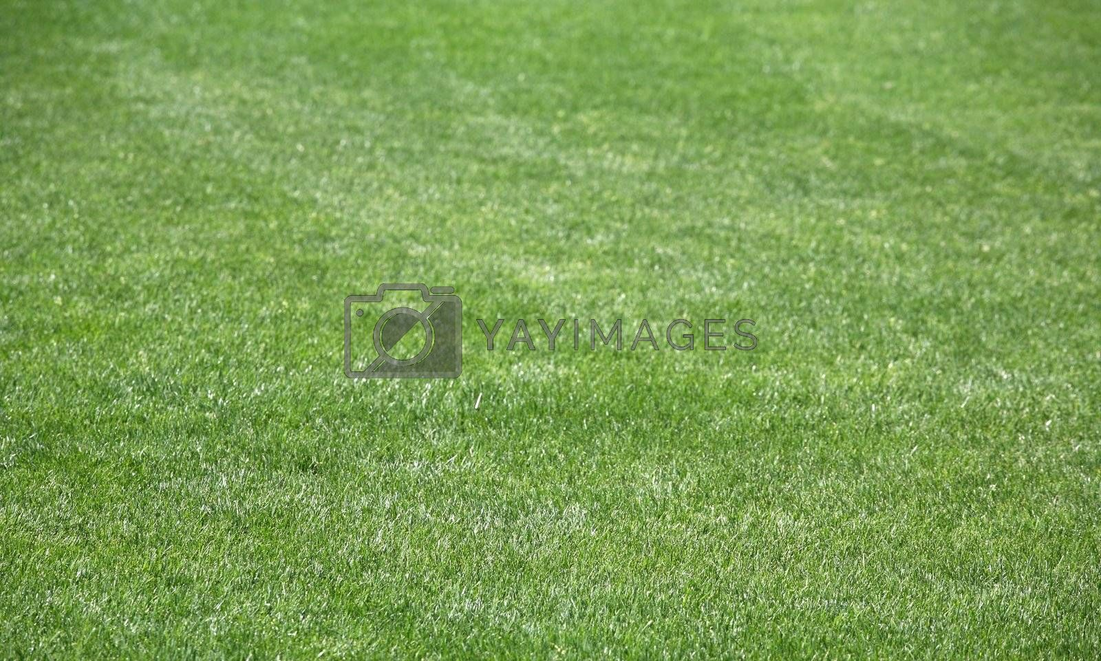 Royalty free image of Grass 5 by scrappinstacy