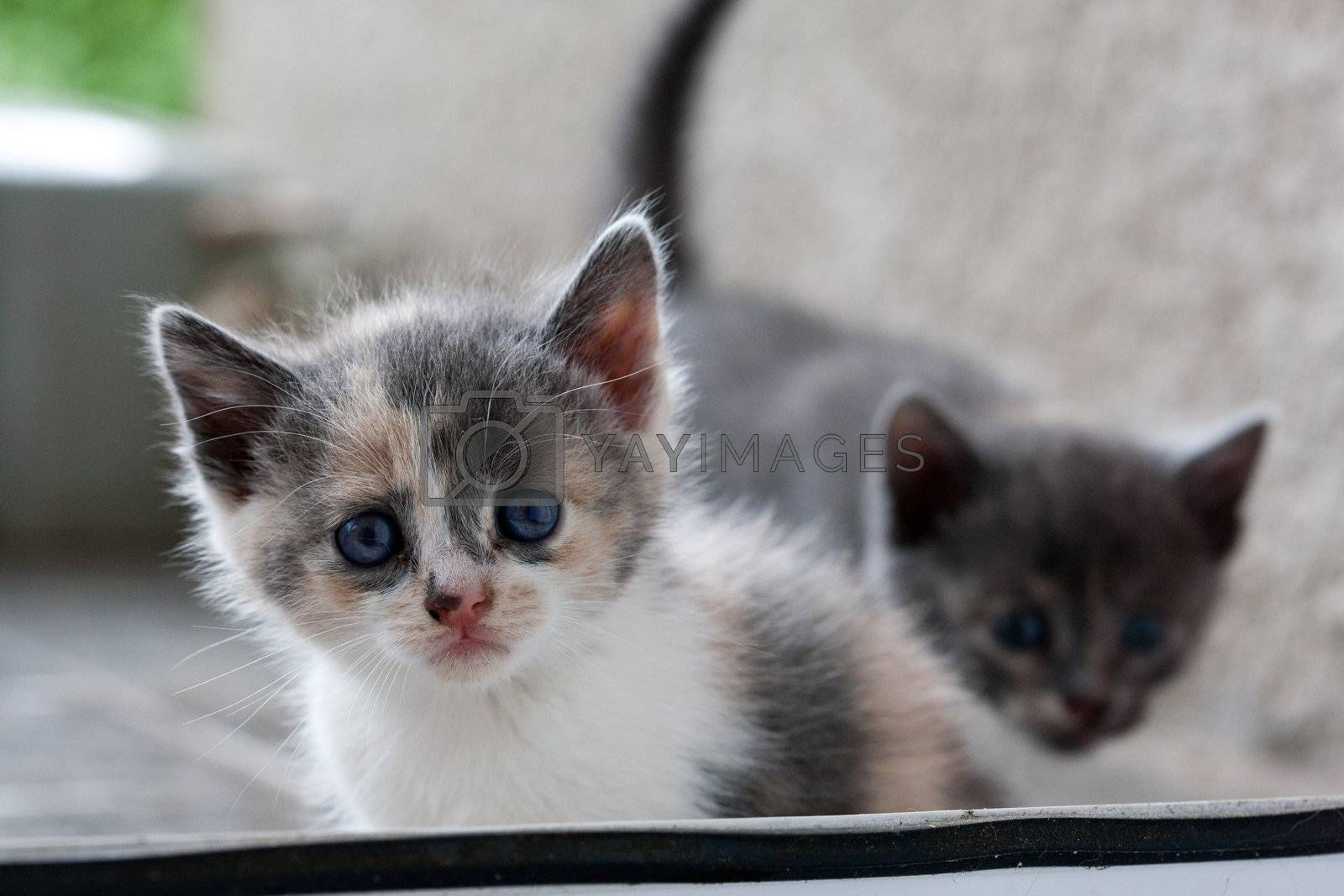 Royalty free image of kitten by agg