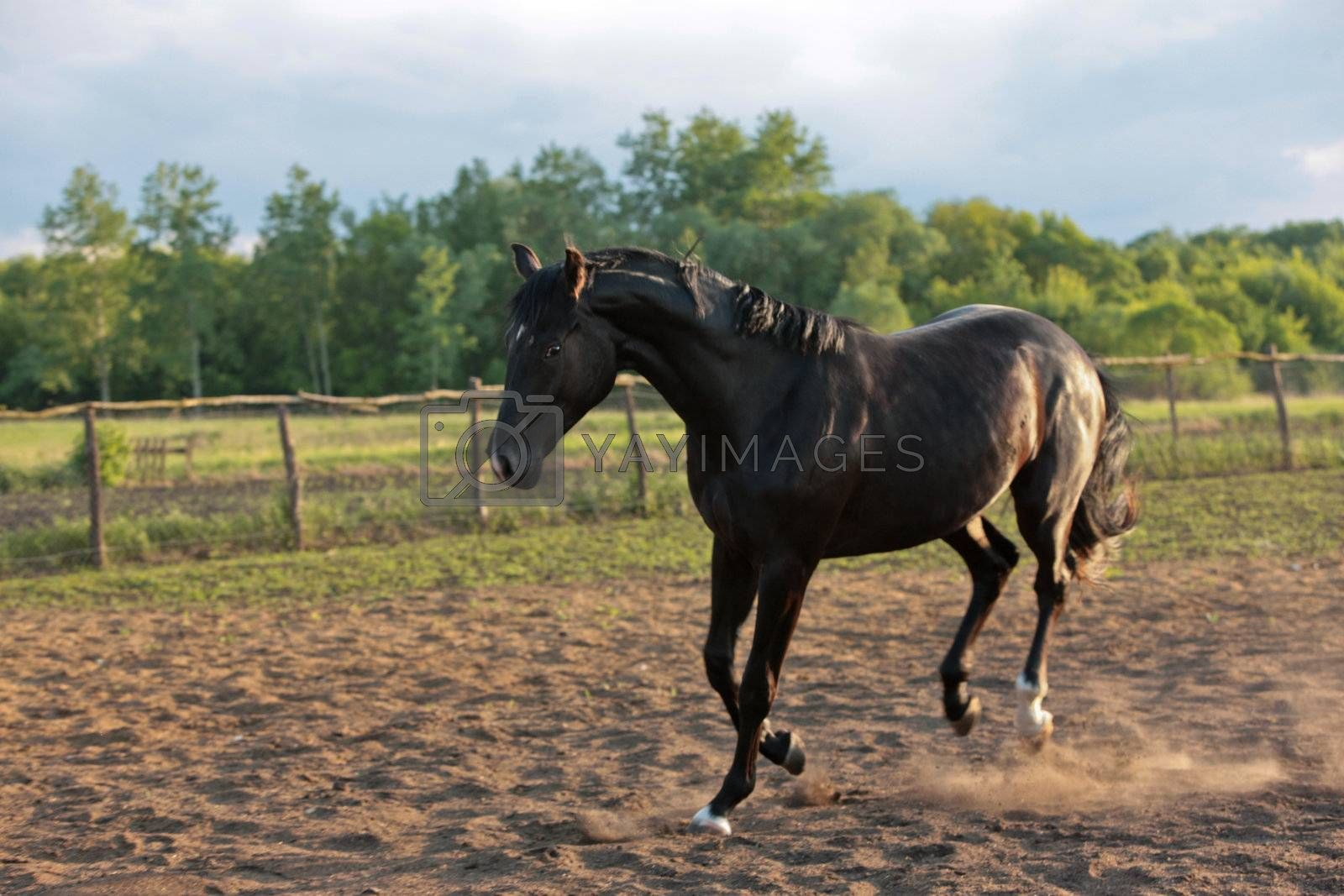 Royalty free image of horse by agg