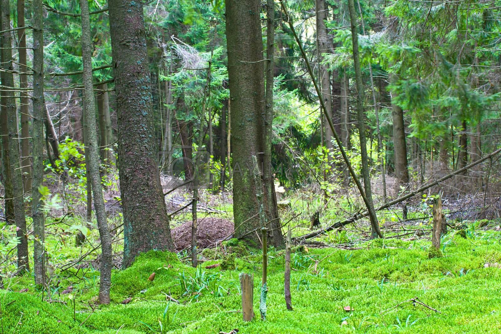 Royalty free image of green forest by Alekcey