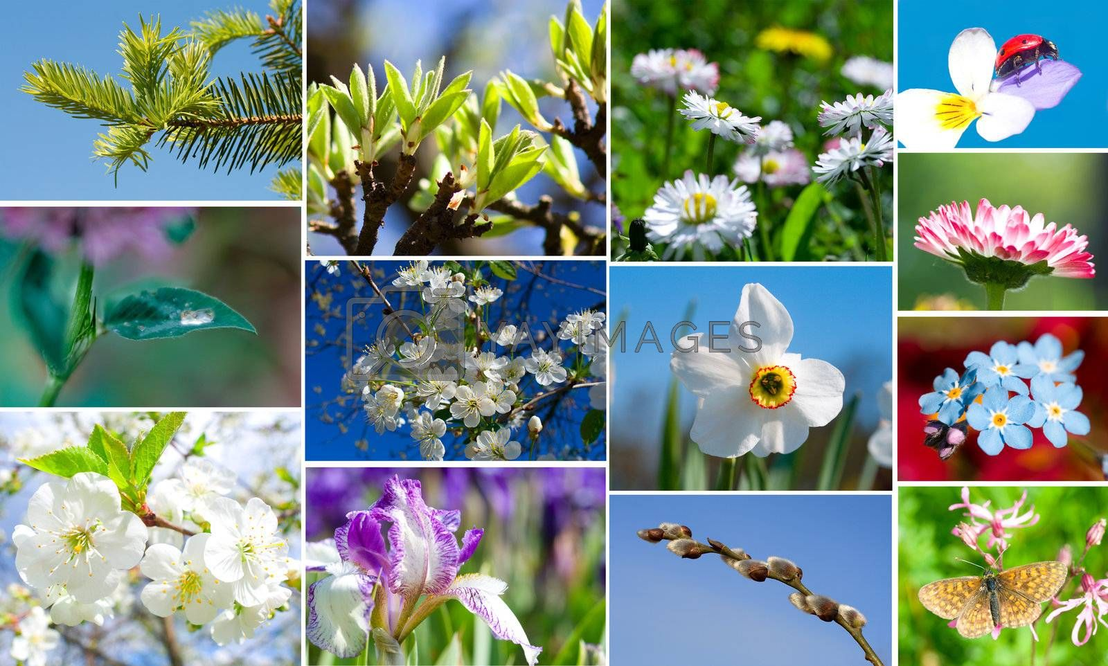 collection of spring flowers and plants