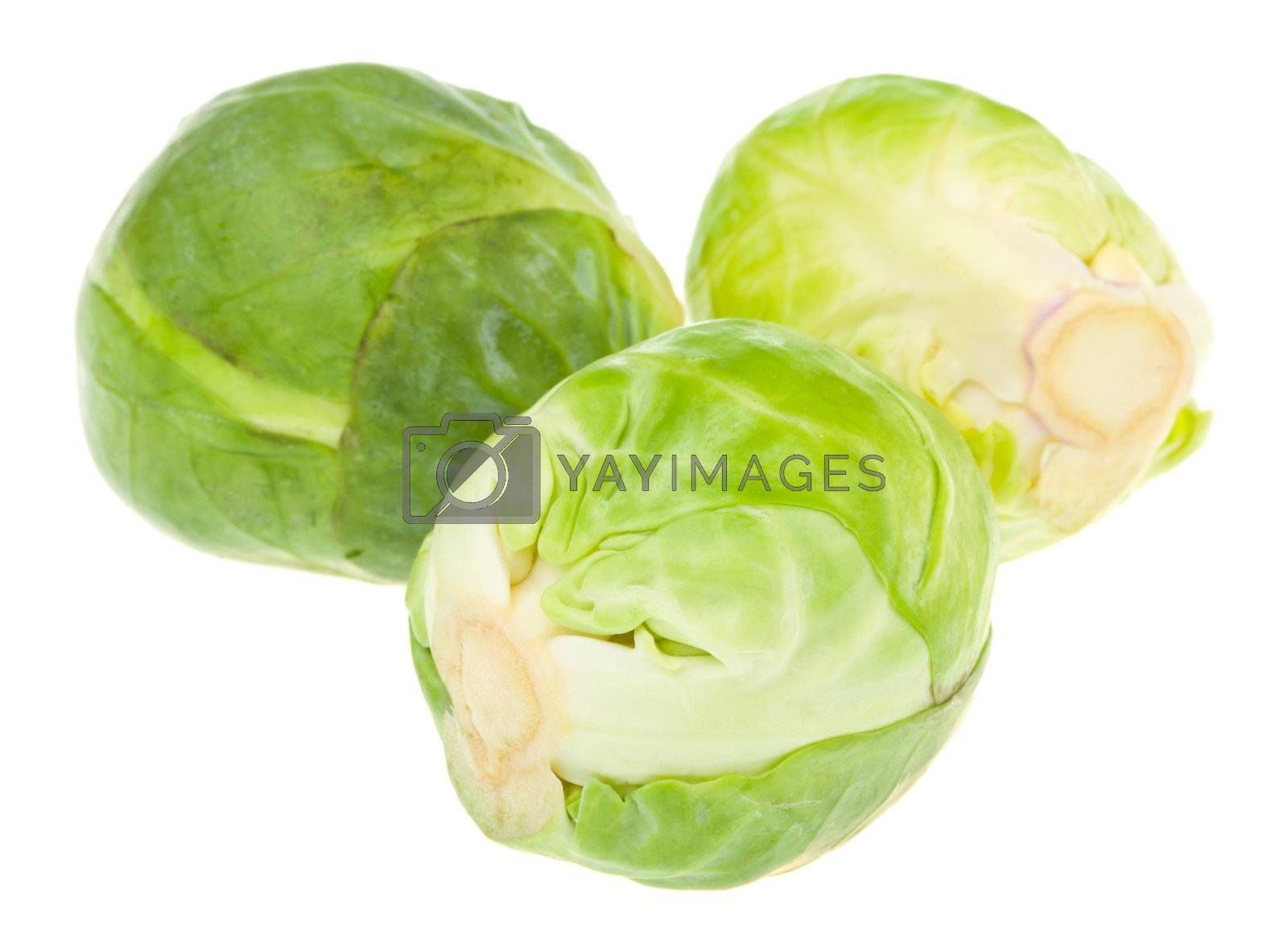 Royalty free image of three brussels sprouts isolated by Alekcey