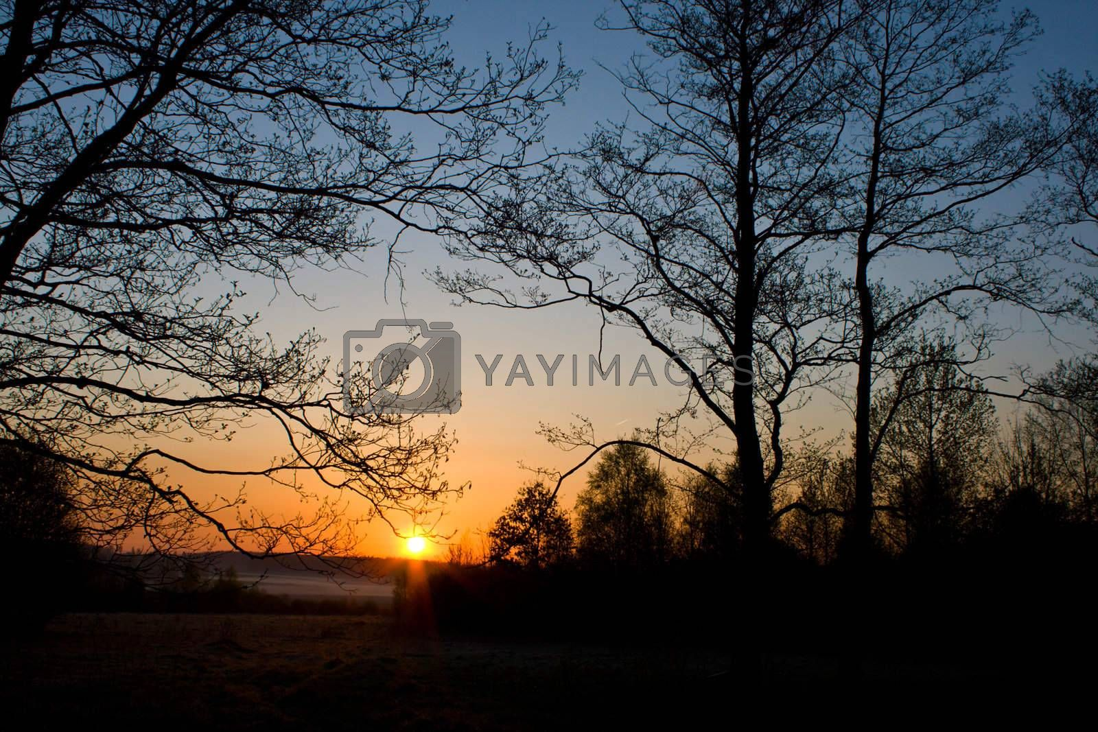 Royalty free image of trees silhouette at dawn by Alekcey