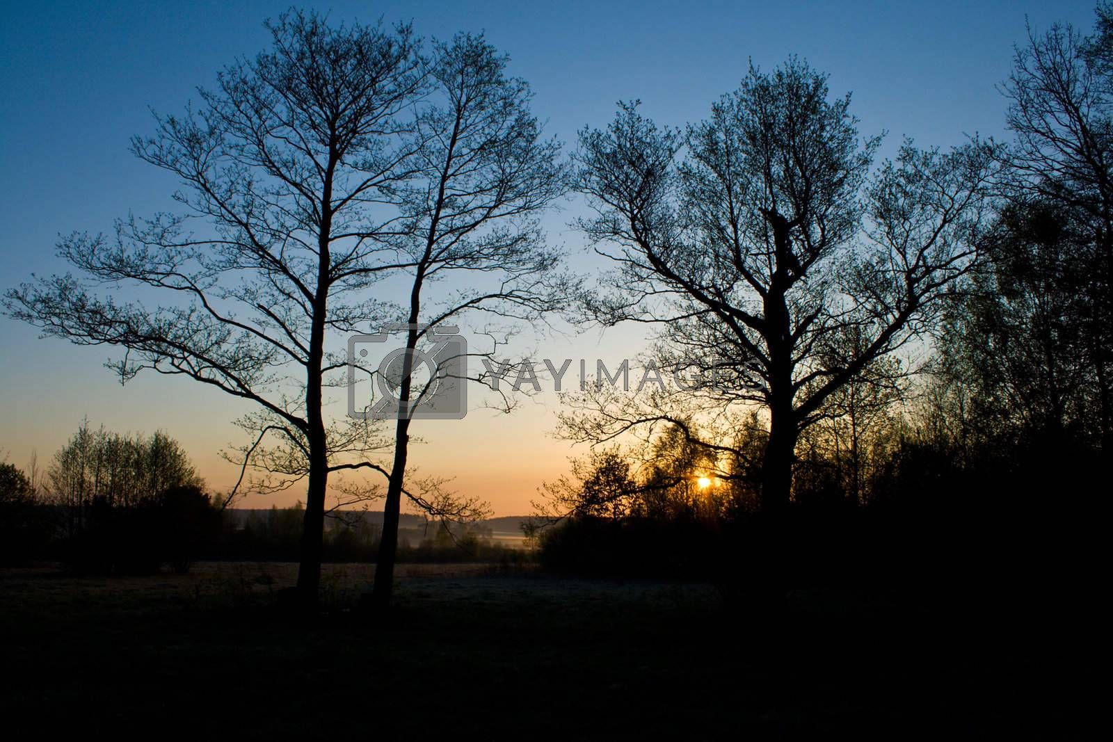 close-up trees silhouette on sunrise