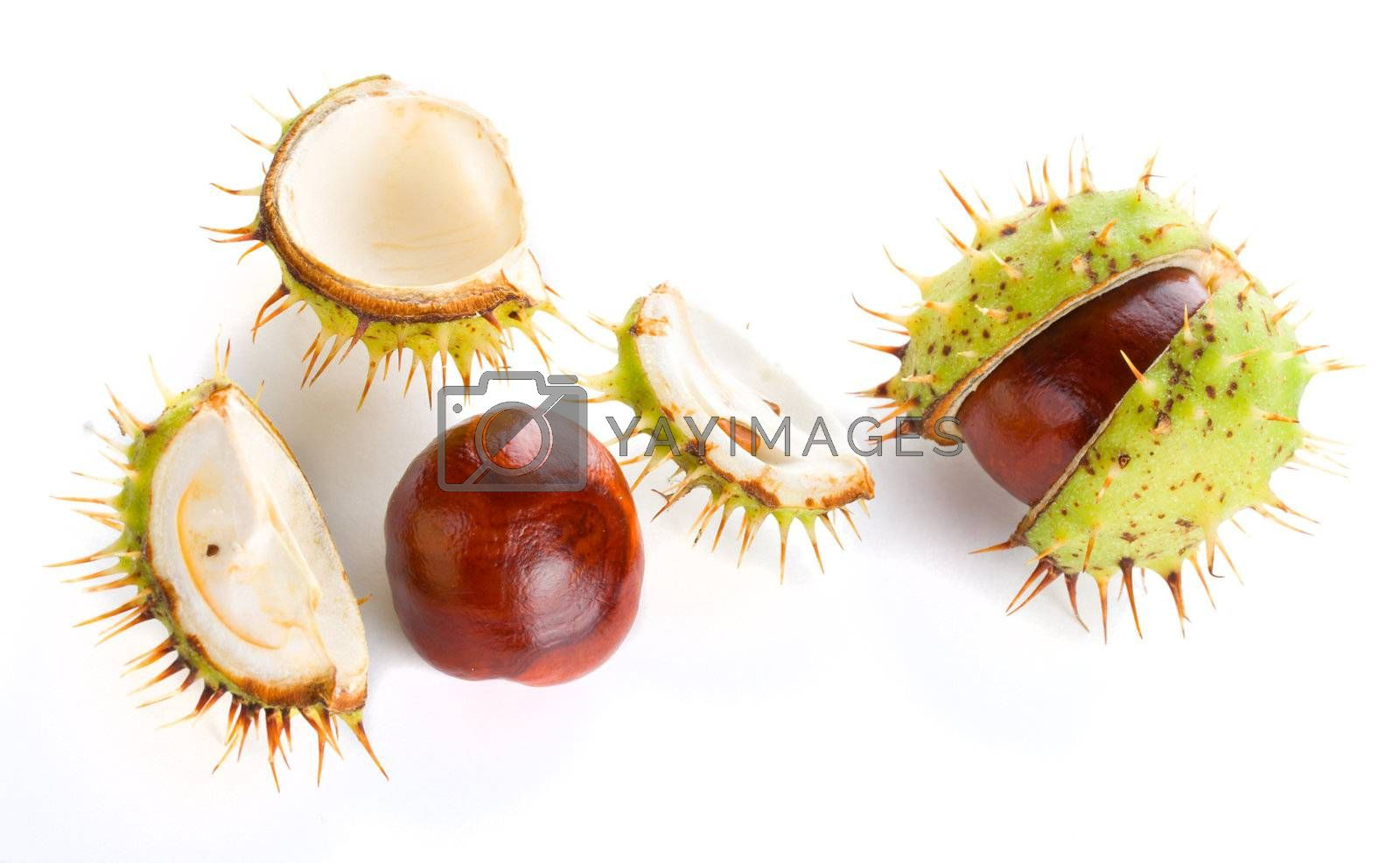 close-up two autumn shaken chestnuts, isolated on white