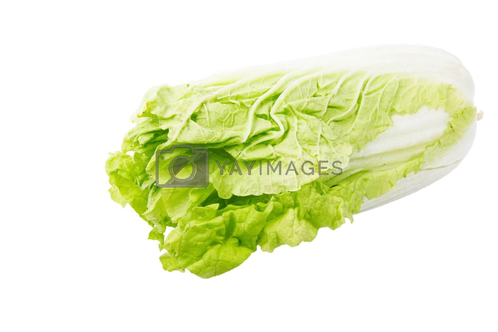 Napa cabbage, isolated on the white background