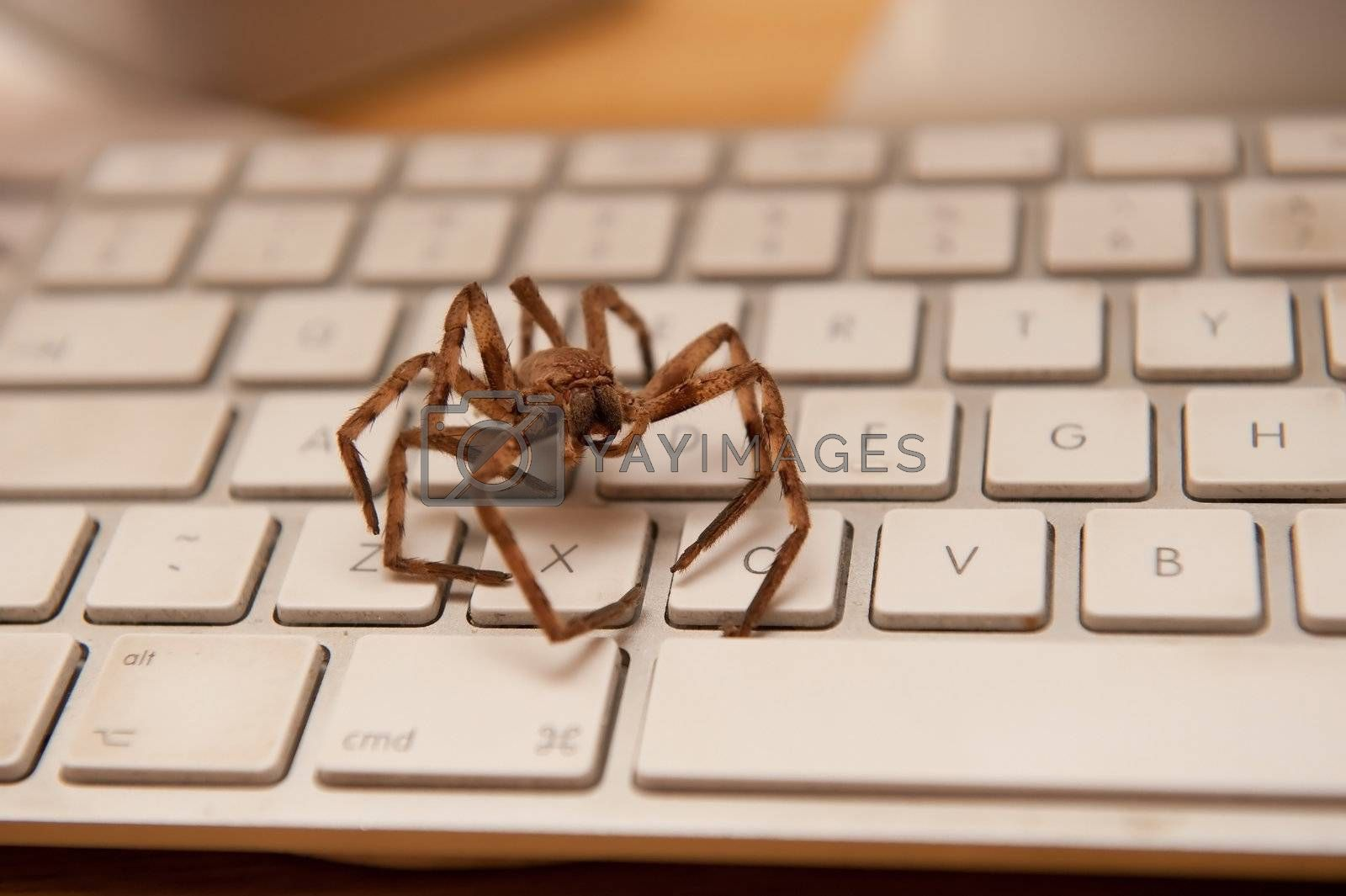 a big brown spider on a white keyboard