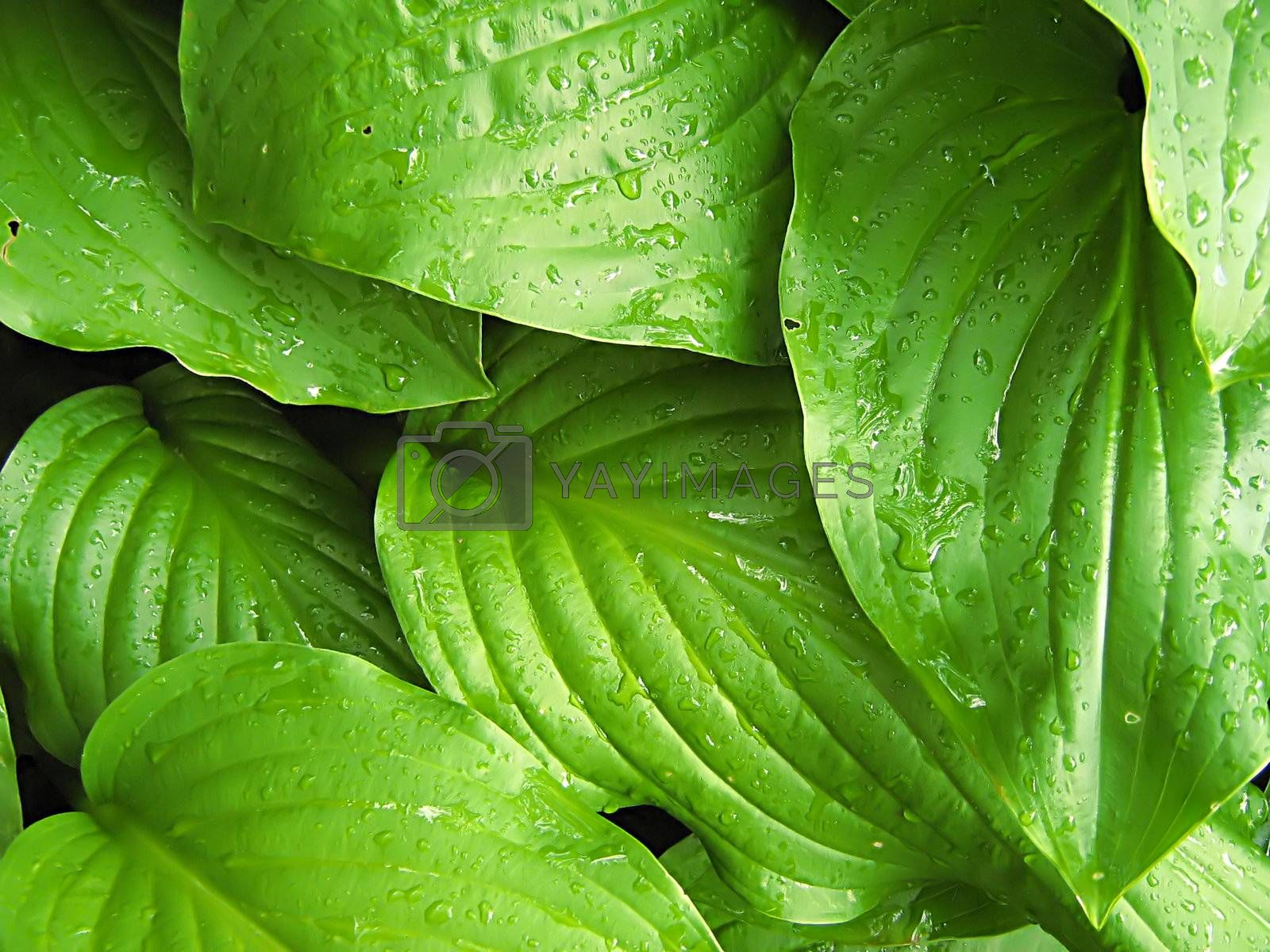 A photograph of leaves detailing their texture.