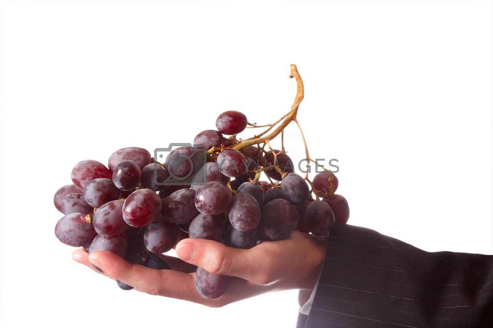 Grapes in a man hand on white background