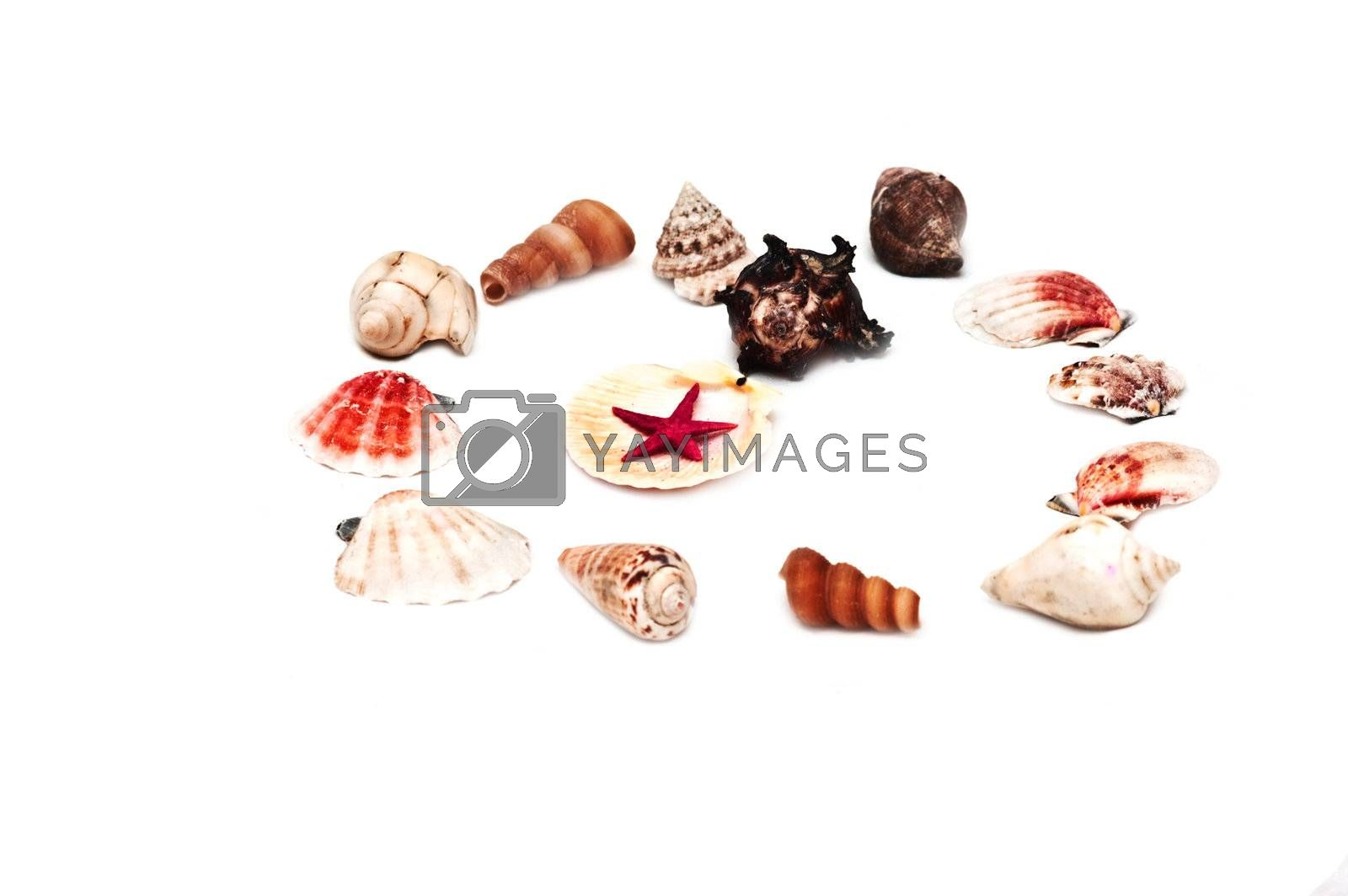 Different type sea shells