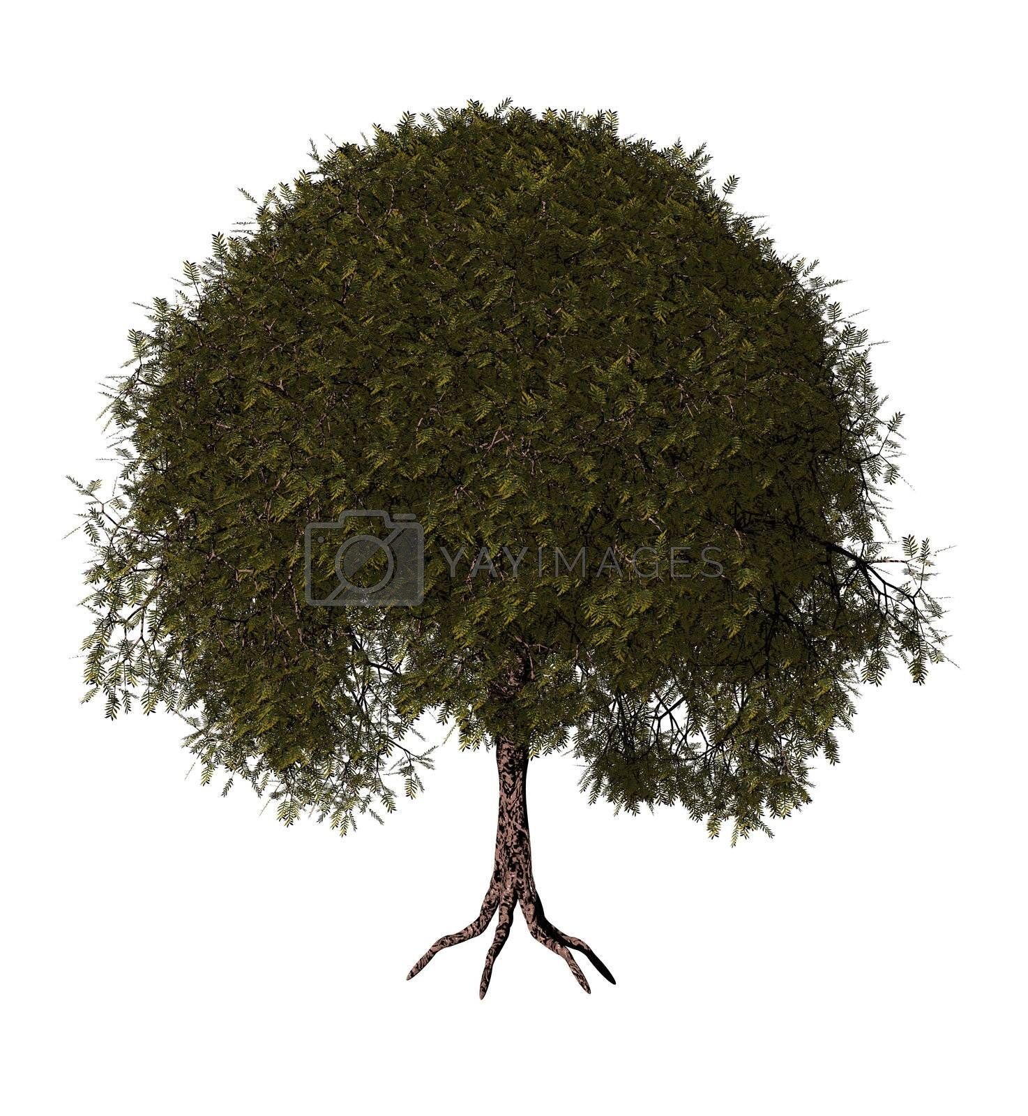 Royalty free image of tree by drizzd