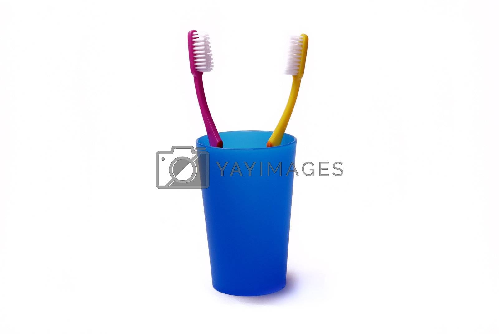 Toothbrushes in a color holder