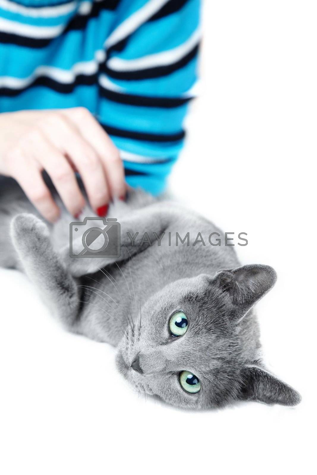 Pampering cat by Novic