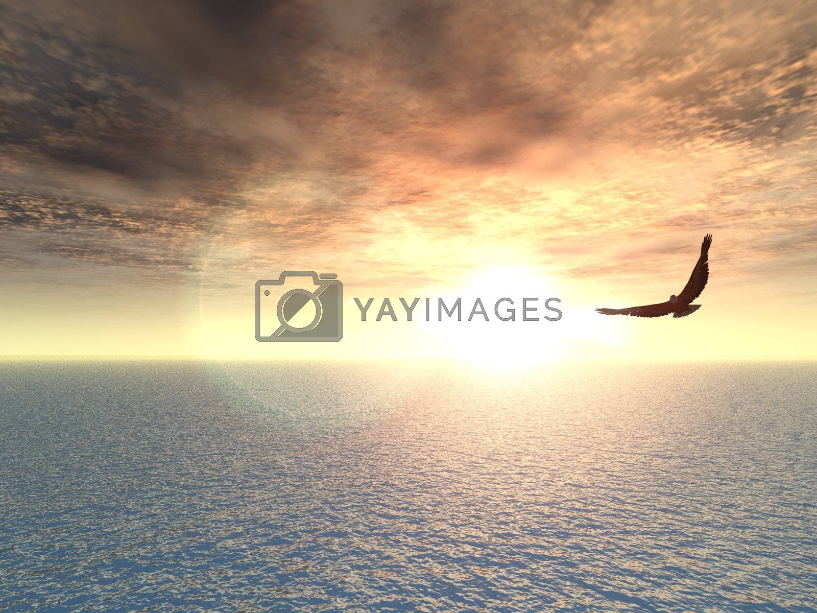 Royalty free image of eagle by drizzd