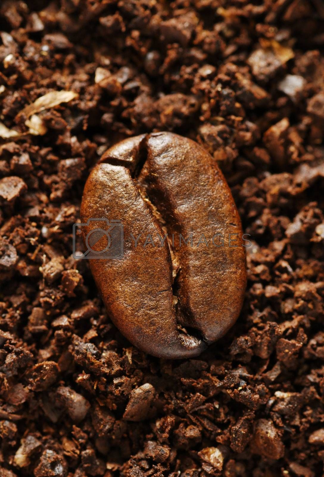 single coffee bean on a background of ground coffee