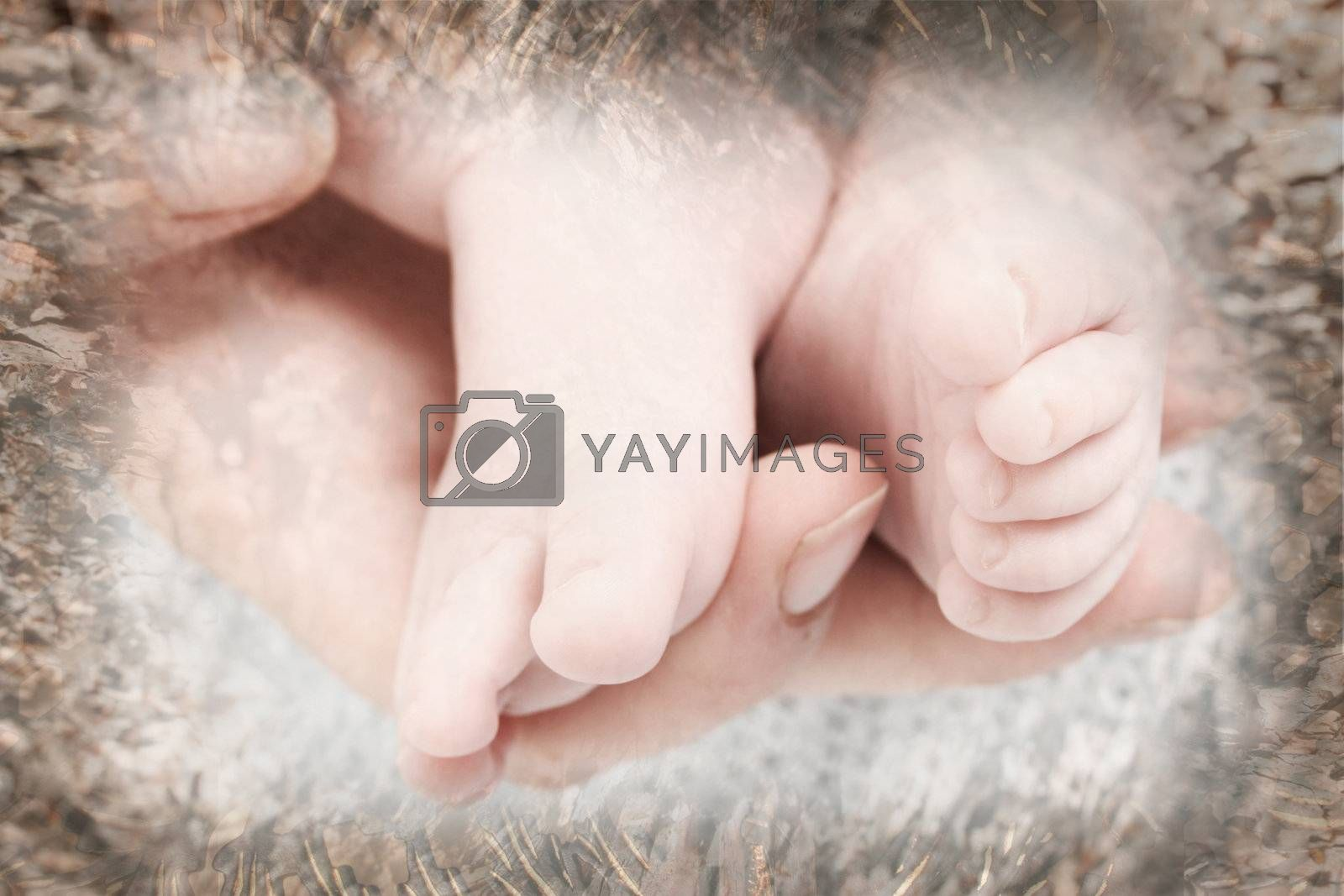 Feet of a baby in his mothers hand