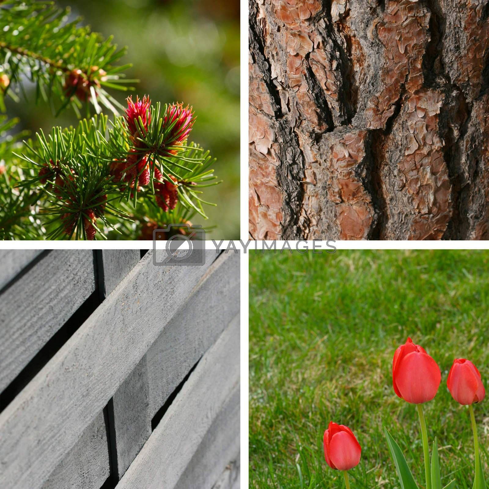 Variety of spring garden backgrounds and textures