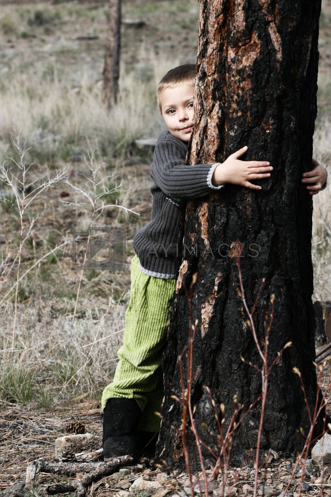 Little boy hugging a big tree in the woods