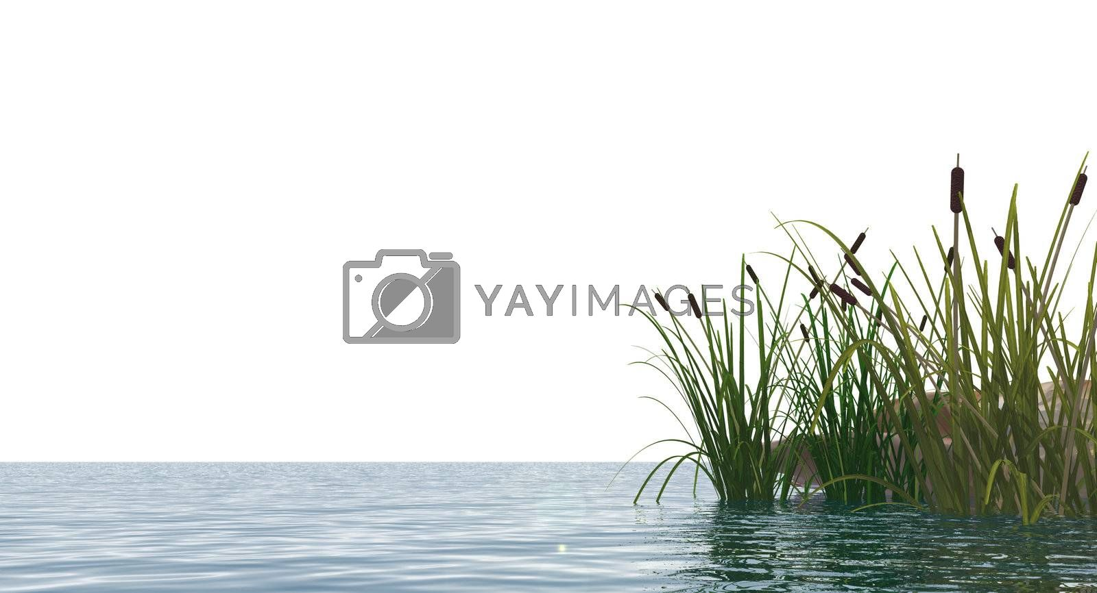 isolated water landscape and reed - 3d illustration