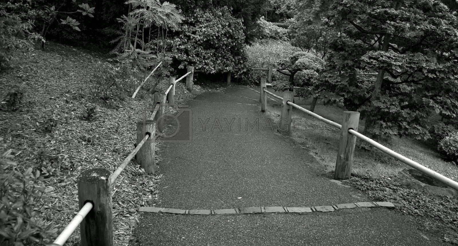 Royalty free image of Road with a wooden fence by janza