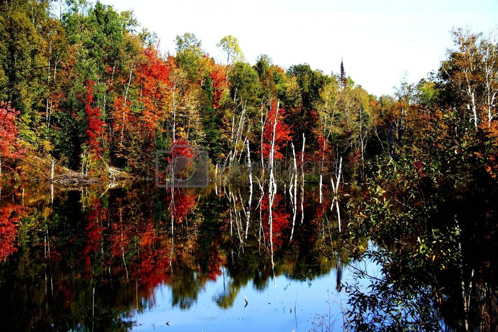 Fall foilage reflecting on a lake in northern Laurentians