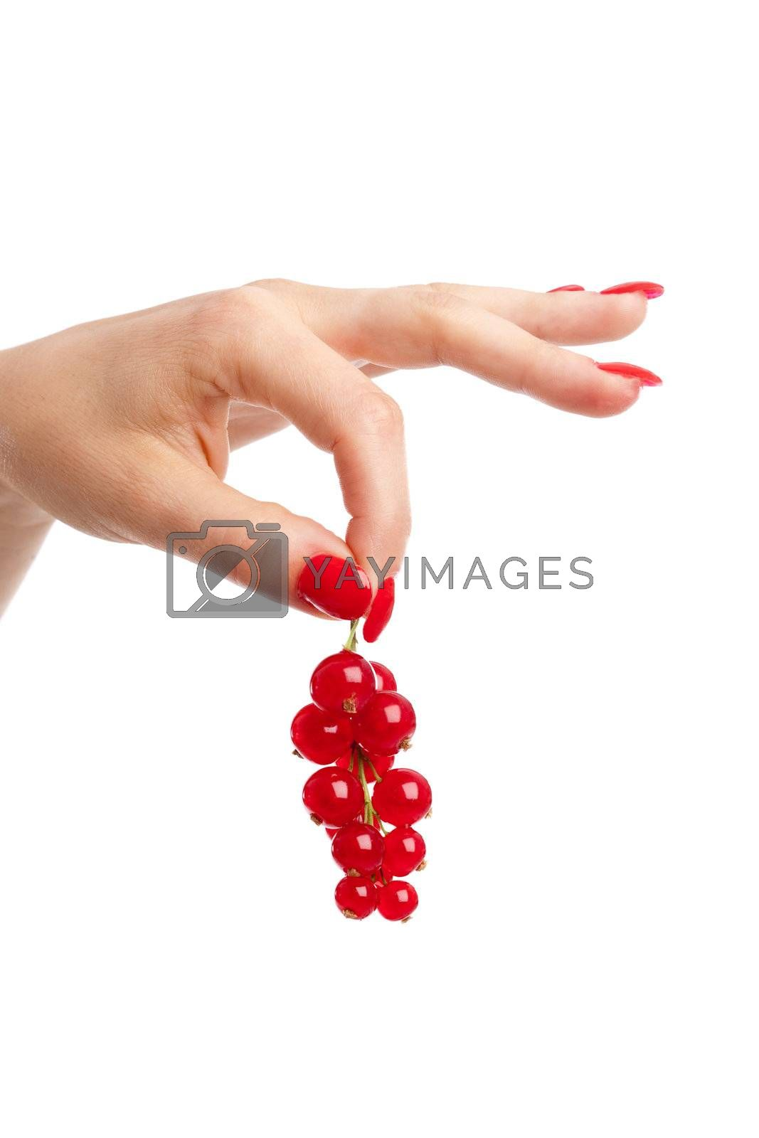 Royalty free image of Holding the currants by Fotosmurf