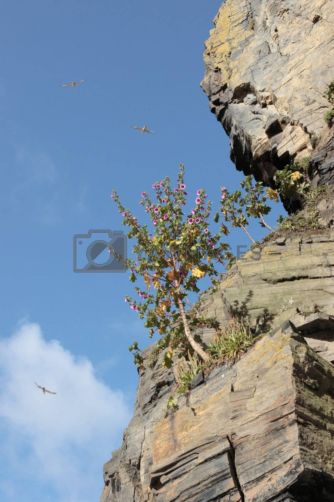 Royalty free image of tree in cliffs by morrbyte