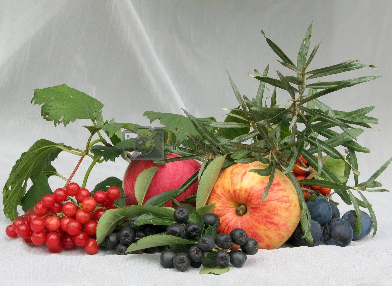 Berries and fruit on a background of a white curtain