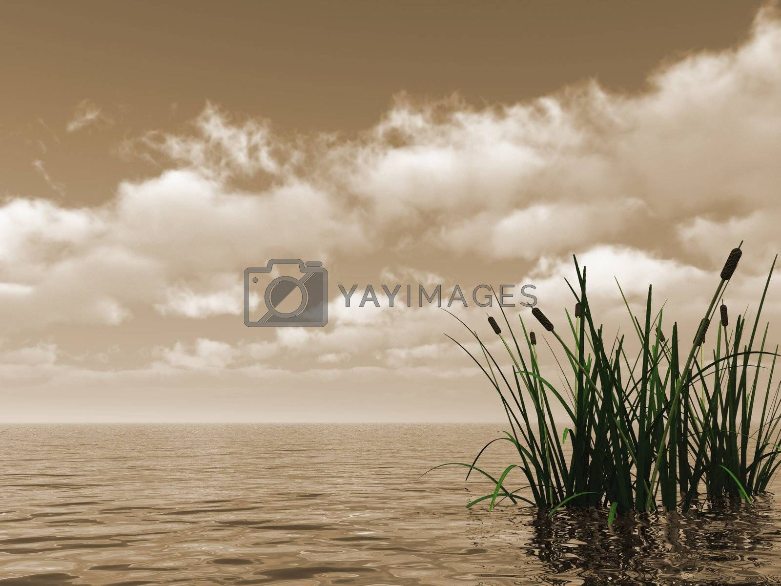 water landscape and reed - 3d illustration