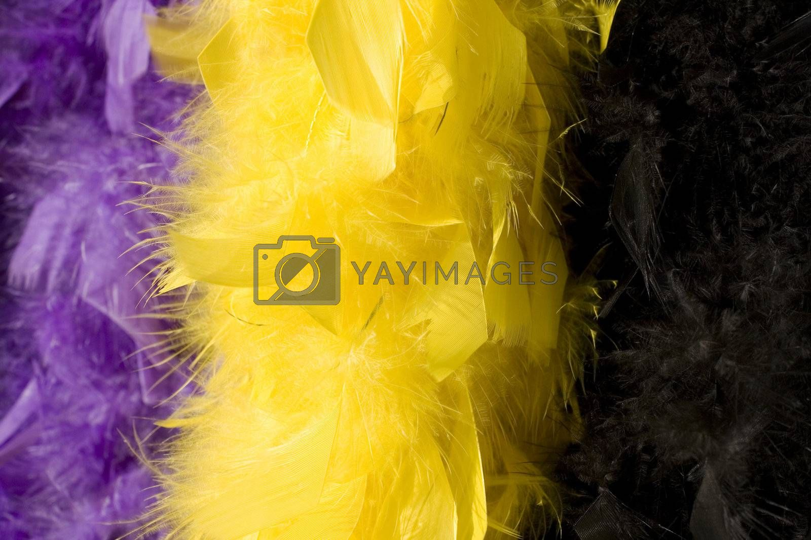 Plumage of duck yellow and black for wearing
